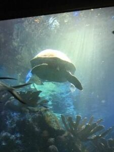 Aquarium - turtle