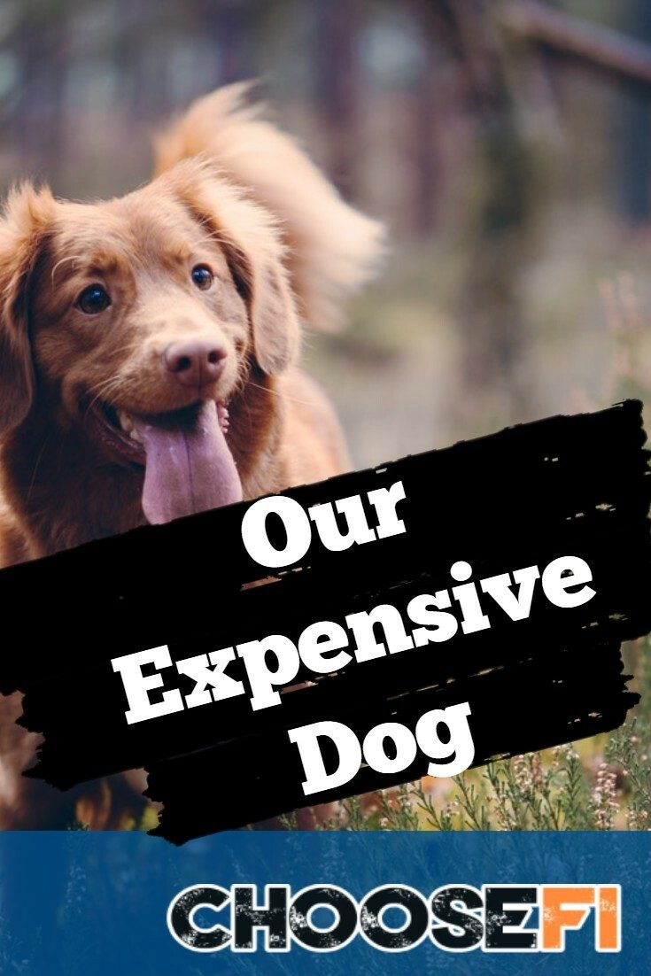 Our Expensive Dog