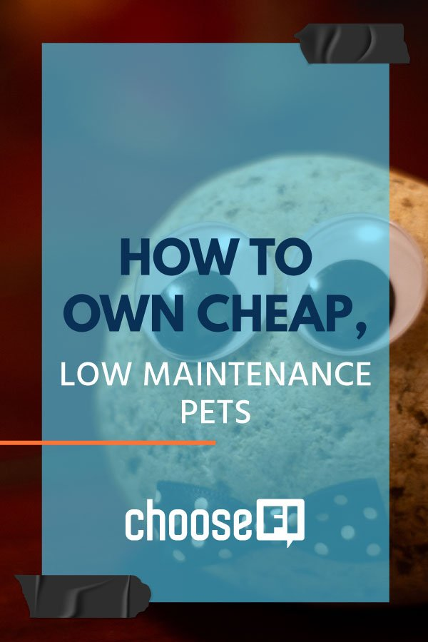 How To Own Cheap Low Maintenance Pets